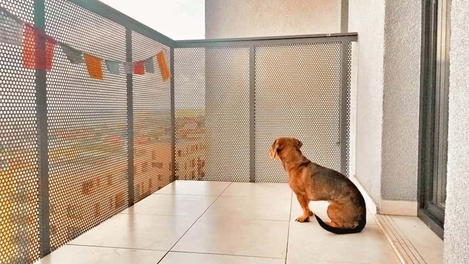 Dog looking out 8th floor balcony with prayer flags in Cluj-Napoca, Romania.