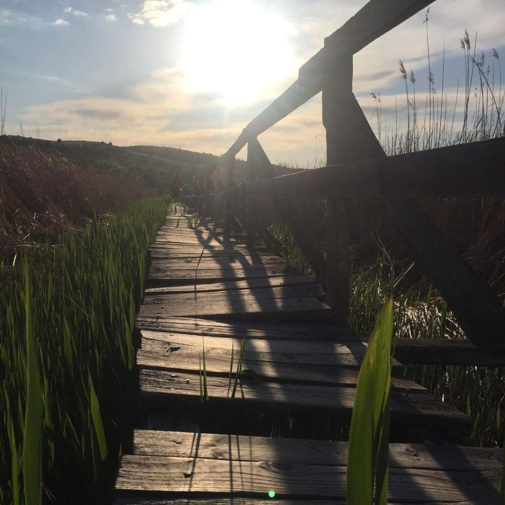 Uneven wooden walkway traversing the Ardeal Delta in Transylvania, one of the best day trips from Cluj Napoca.