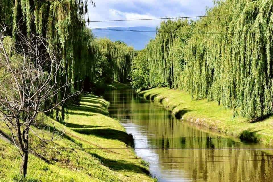Weeping willow trees line the length of the Cibin River in Sibiu, Romania