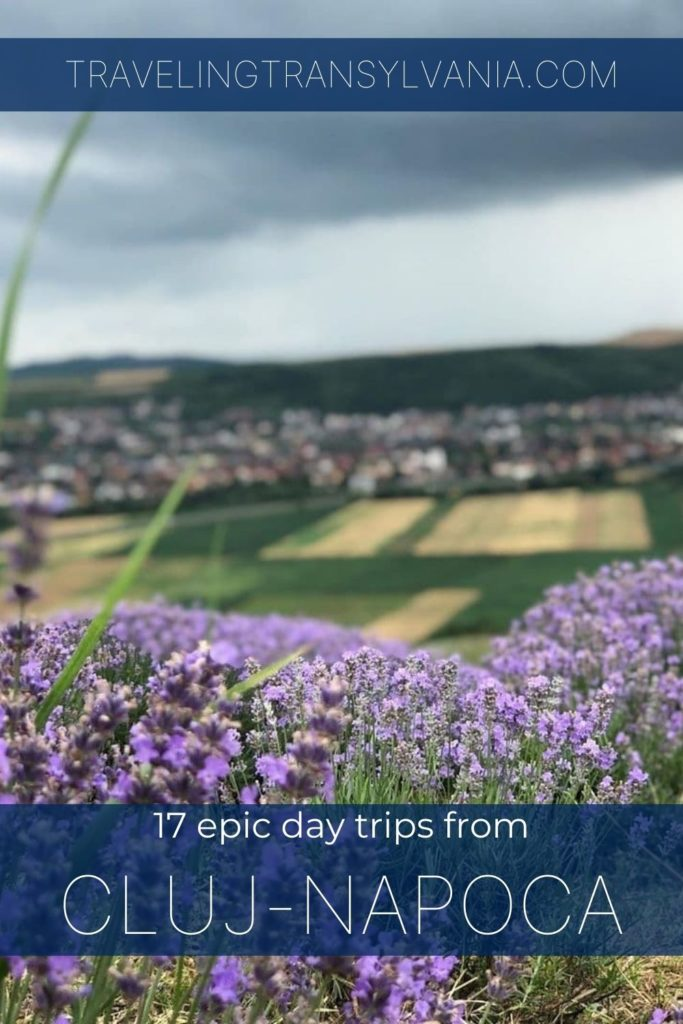 Day trips from Cluj Napoca pinterest graphic with lavender fields in background.