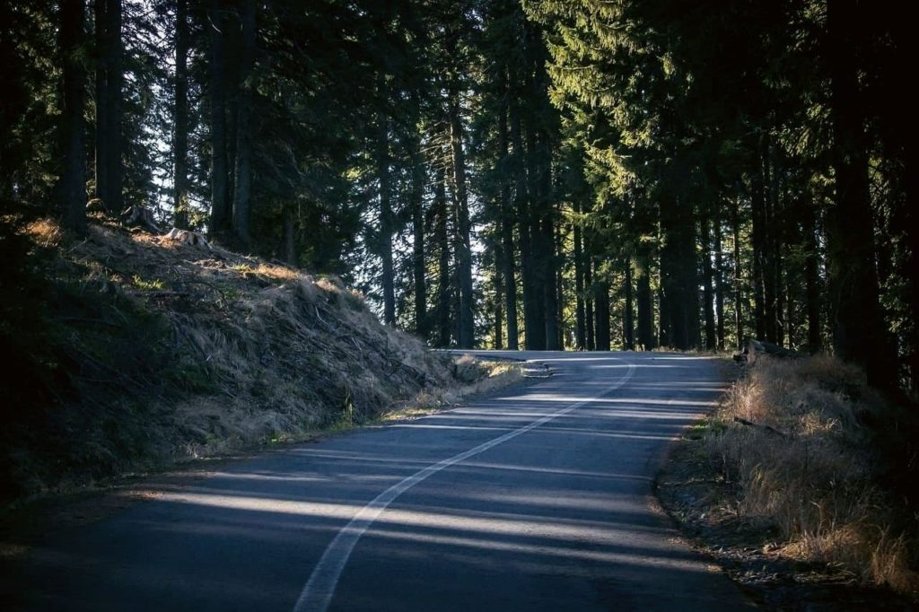 Dark road in the shadows of Transylvanian forest
