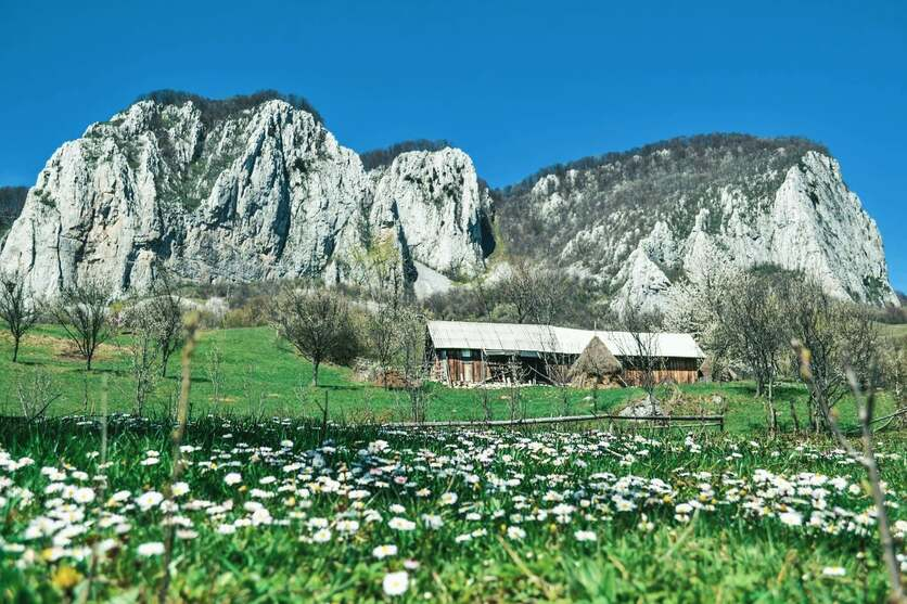 Flower-filled meadow next to mountains with an old village house standing alone.